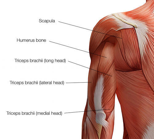 Top 5 Best Triceps Exercises for Mass Building