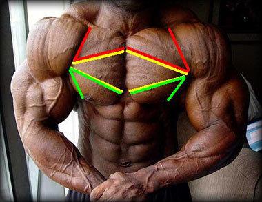 upper chest view